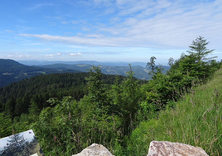 Head for the Black Forest by bike and you'll forever be pining to go back